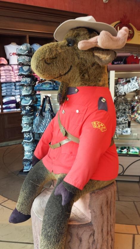 Canadian Moose Mounty